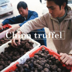 Villa Marsi truffel uit China